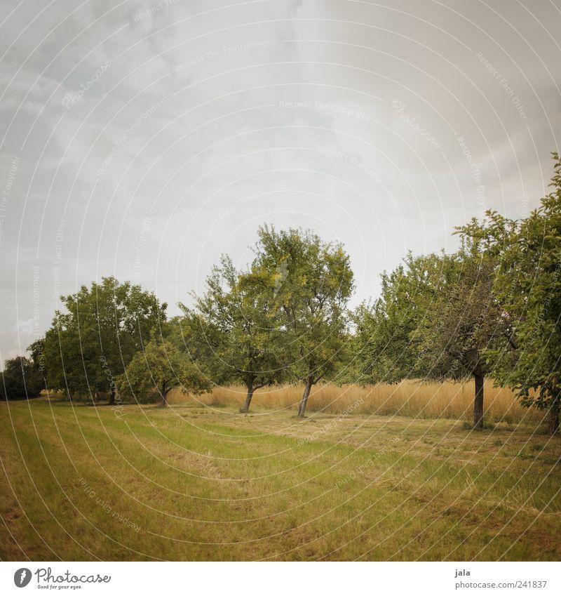 fallobstwiese Landwirtschaft Forstwirtschaft Natur Landschaft Pflanze Himmel Wolken Sommer Baum Gras Grünpflanze Nutzpflanze Obstbaum Feld nachhaltig natürlich