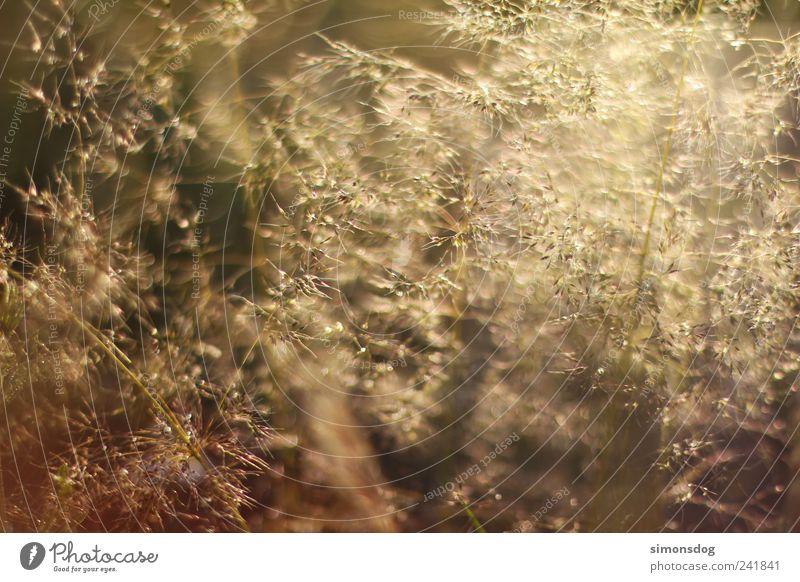 glitzer Natur Landschaft Sommer Gras Farn Wiese Feld Bewegung glänzend leuchten elegant Gefühle Idylle Leichtigkeit rein Stimmung gold erleuchten Glamour