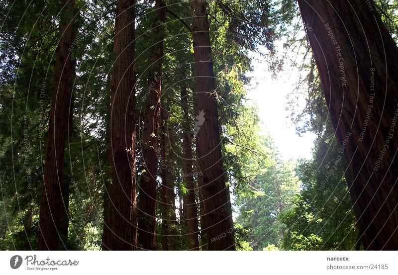 wald Baum Blatt Wald Holz groß Macht USA Sträucher Amerika Mammut Südwest