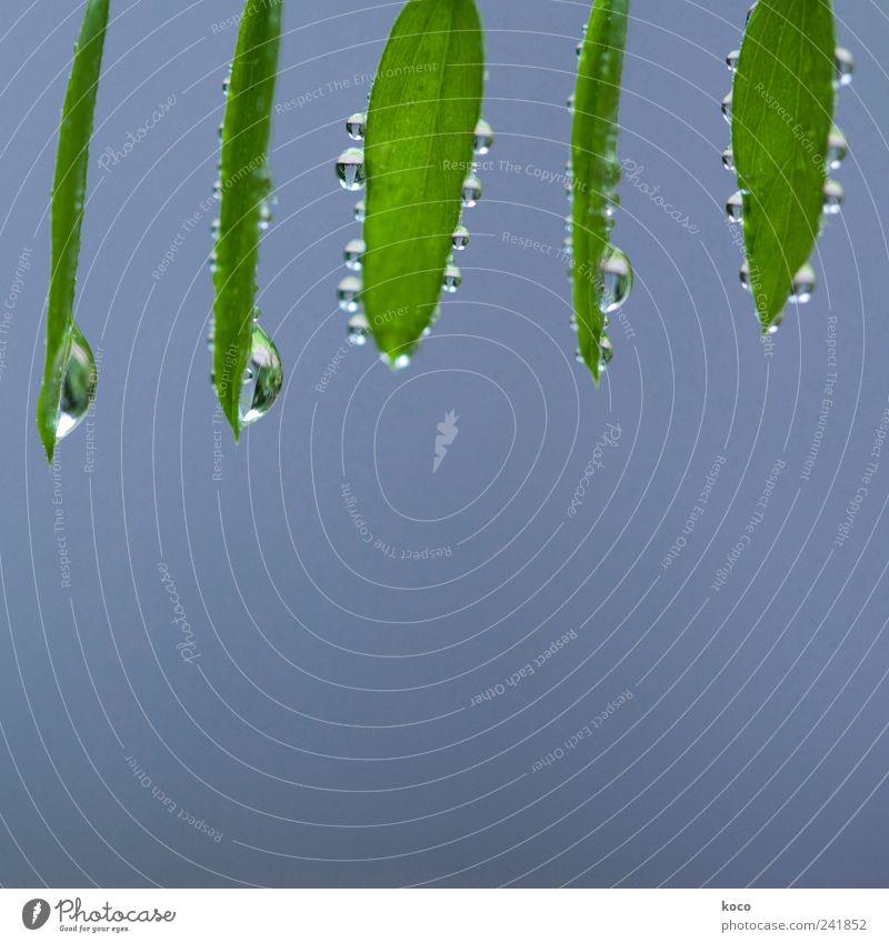 Blatterln mit Tropferln für Manun Natur blau schön grün Wasser Sommer Leben Frühling Glück oben Freundschaft Zufriedenheit frisch nass Fröhlichkeit
