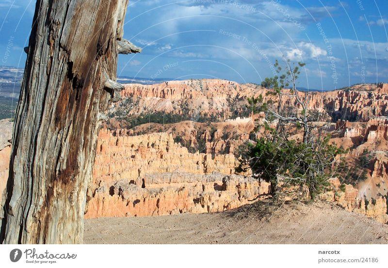 bryce [2] Baum Berge u. Gebirge Stein Felsen Perspektive Sträucher USA Aussicht Amerika Schlucht Nationalpark Südwest Bryce Canyon Bryce Canyon National Park