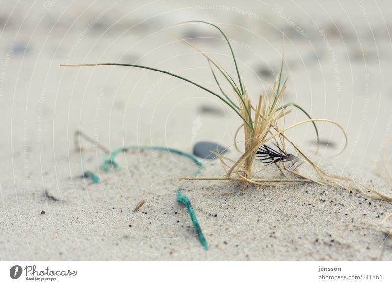 Strandgedrömel Umwelt Natur Landschaft Tier Sand Küste liegen Einsamkeit Strandgut Feder Schnur Seil Umweltverschmutzung hell Gras Farbfoto Gedeckte Farben