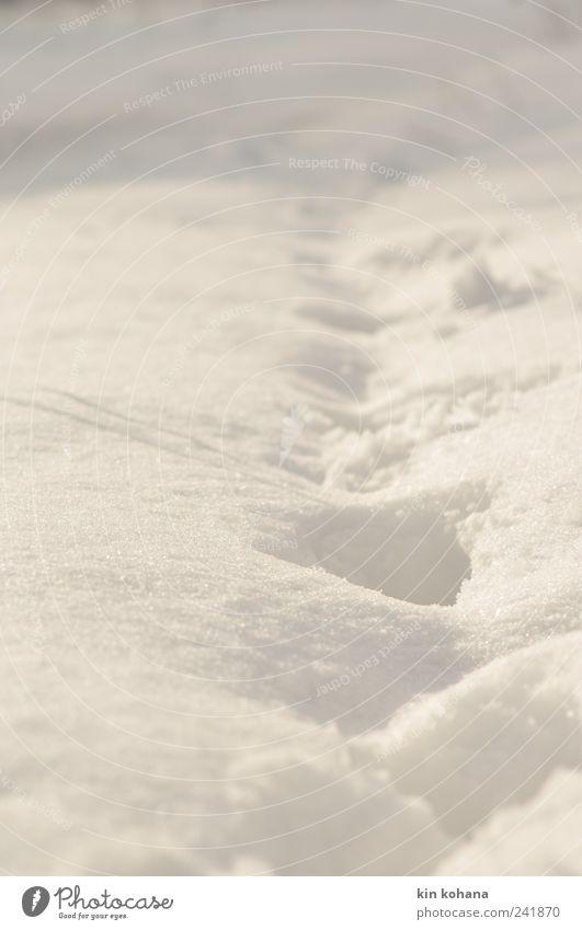 unterwegs weiß Winter Einsamkeit Wiese kalt Schnee Garten Park Feld gehen Hoffnung Sehnsucht Fußspur Schönes Wetter Fußgänger schreiten