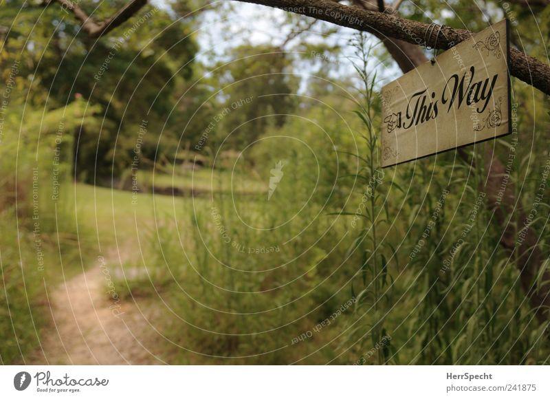 Walk this way! Natur grün Pflanze Sommer Wald Wiese Garten Wege & Pfade Park Landschaft Schilder & Markierungen Idylle Pfeil Wegweiser
