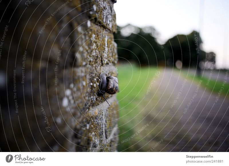 Wandschnecke Stein Beton Natur Schnecke Mauer Moos Gras grün grau braun Perspektive Spaziergang Wege & Pfade Straße Wiese Außenaufnahme Dämmerung Abend