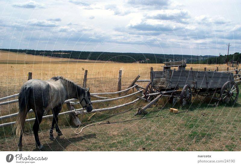 einsames pferd Wolken Wiese Verkehr Pferd USA Amerika Zaun Wagen schlechtes Wetter Südwest