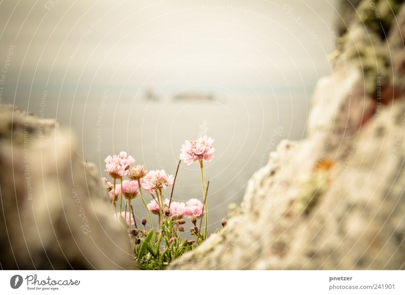 Nahe den Klippen II Umwelt Natur Landschaft Pflanze Urelemente Wasser Himmel Wolkenloser Himmel Sonnenaufgang Sonnenuntergang Sonnenlicht Frühling Sommer Klima