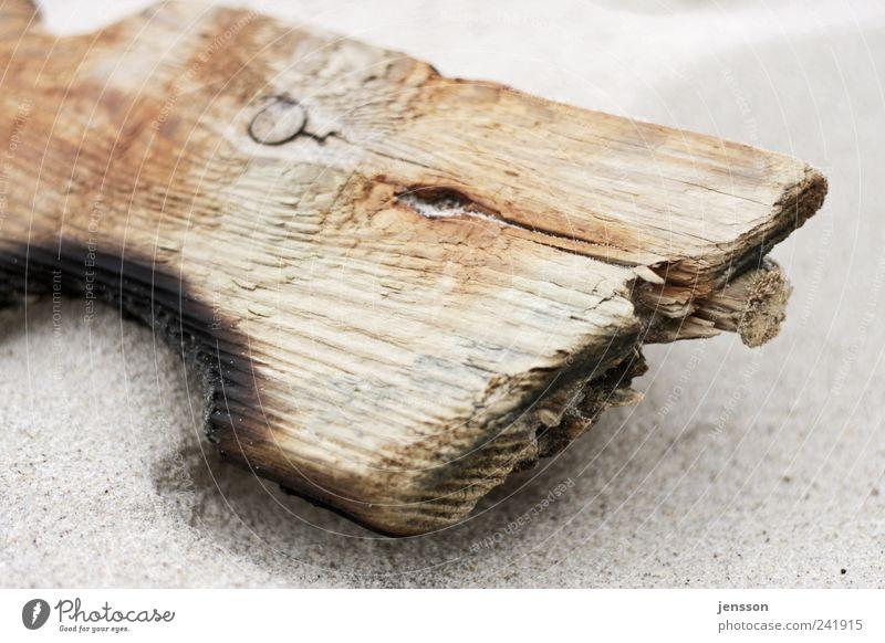 Der Rest vom Schützenfest Umwelt Natur Sand Küste Strand Holz liegen alt dreckig kaputt natürlich Umweltverschmutzung Zerstörung Müll Strandgut angebrannt