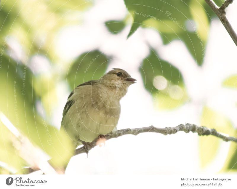 Neugieriger Vogel Natur grün Sonne Baum Tier Blatt gelb klein orange leuchten Wildtier Kommunizieren Fröhlichkeit Schönes Wetter Flügel
