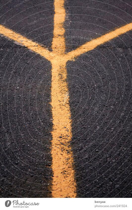 Riesen Vogelfuß eines Steinzeit-Emu gelb Straße Bewegung Wege & Pfade Linie Beton Schilder & Markierungen Beginn Verkehr Wachstum Asphalt Streifen Kreuz Teilung