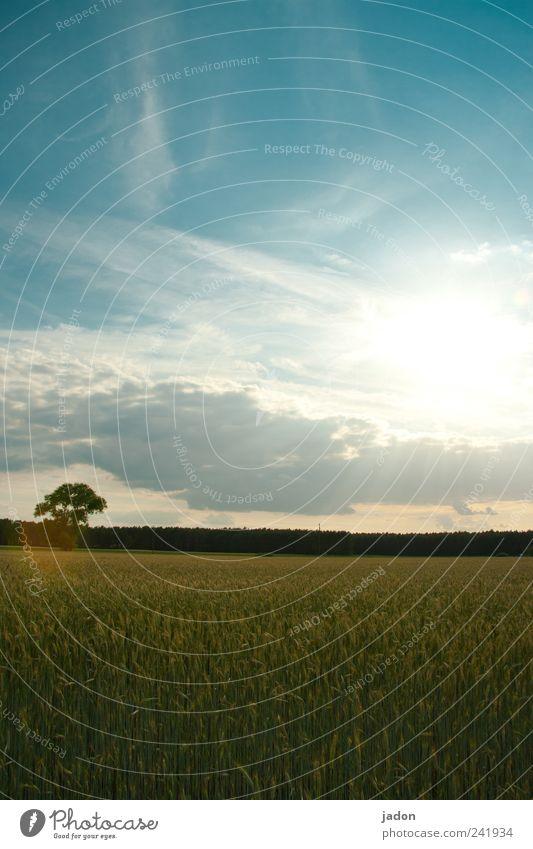 sonne tanken. Lebensmittel Bioprodukte Landschaft Himmel Wolken Horizont Sonne Sonnenlicht Sommer Schönes Wetter Pflanze Baum Nutzpflanze Feld Kornfeld Wachstum