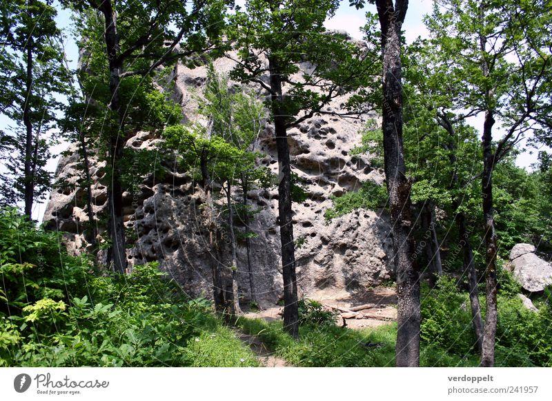 Käseberg Natur Pflanze Luft Sommer Baum Wald Berge u. Gebirge Farbfoto Außenaufnahme