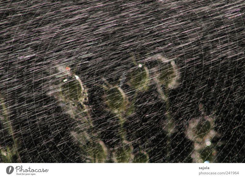 abkühlung Natur Pflanze Wasser Wassertropfen Sommer stehen ästhetisch gießen Wasserstrahl dunkel Regen kühlen Kühlung Linie frisch Erfrischung Farbfoto