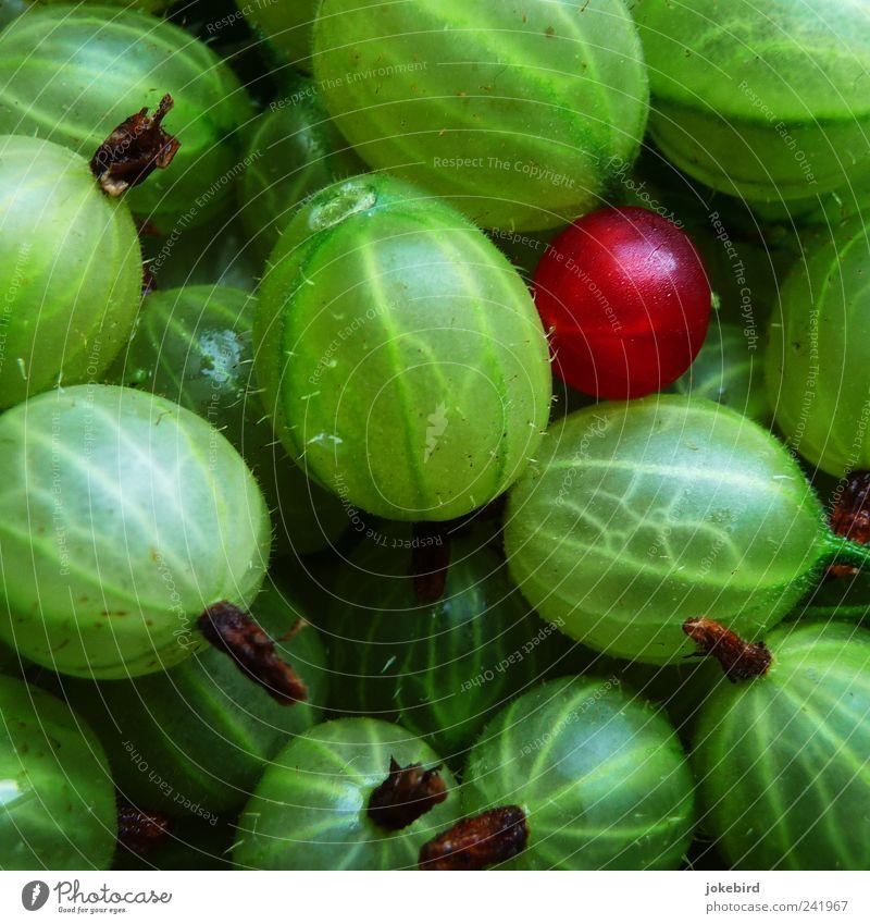 finde den Fehler Lebensmittel Frucht Vegetarische Ernährung genießen leuchten saftig sauer stachelig grün rot Einsamkeit Natur Gesundheit Außenseiter