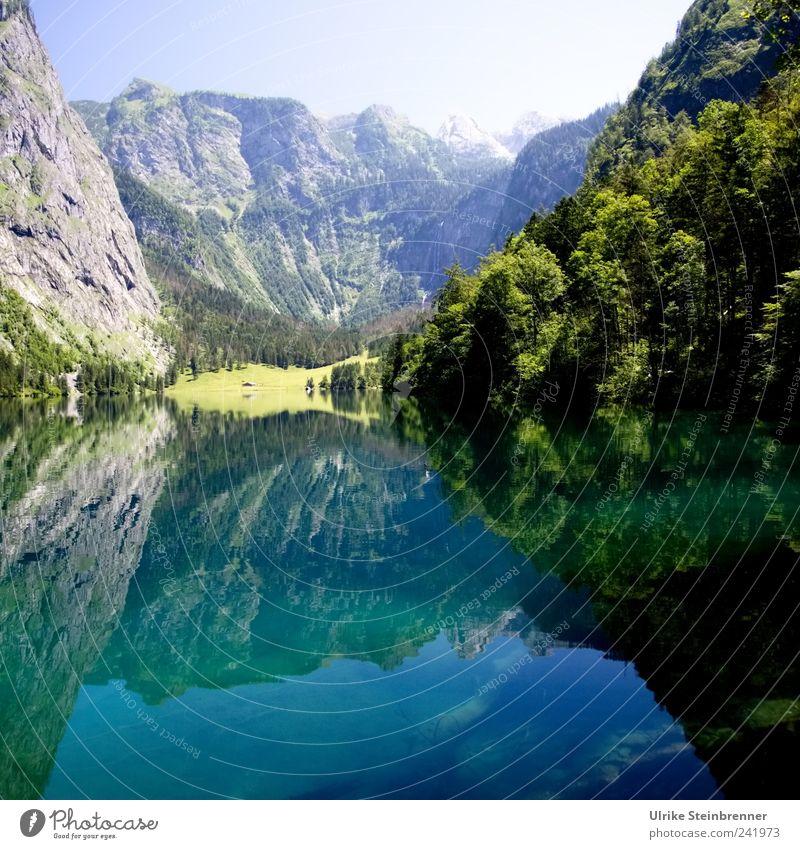 Watermirror Umwelt Natur Landschaft Pflanze Urelemente Erde Luft Wasser Himmel Sonnenlicht Sommer Schönes Wetter Baum Blume Sträucher Felsen Alpen