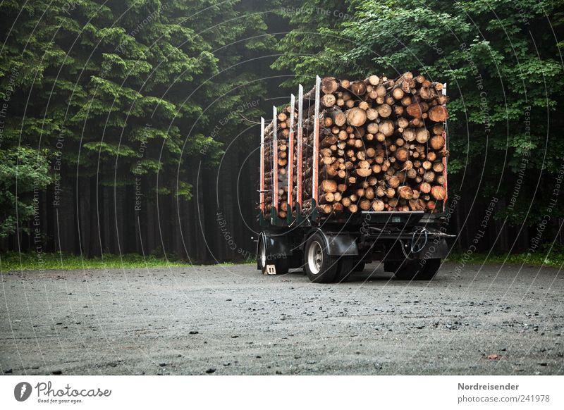 Holz Natur Pflanze Wald Arbeit & Erwerbstätigkeit Wege & Pfade Umwelt Verkehr stehen Beruf Lastwagen Landwirtschaft Ernte Baumstamm nachhaltig Forstwirtschaft