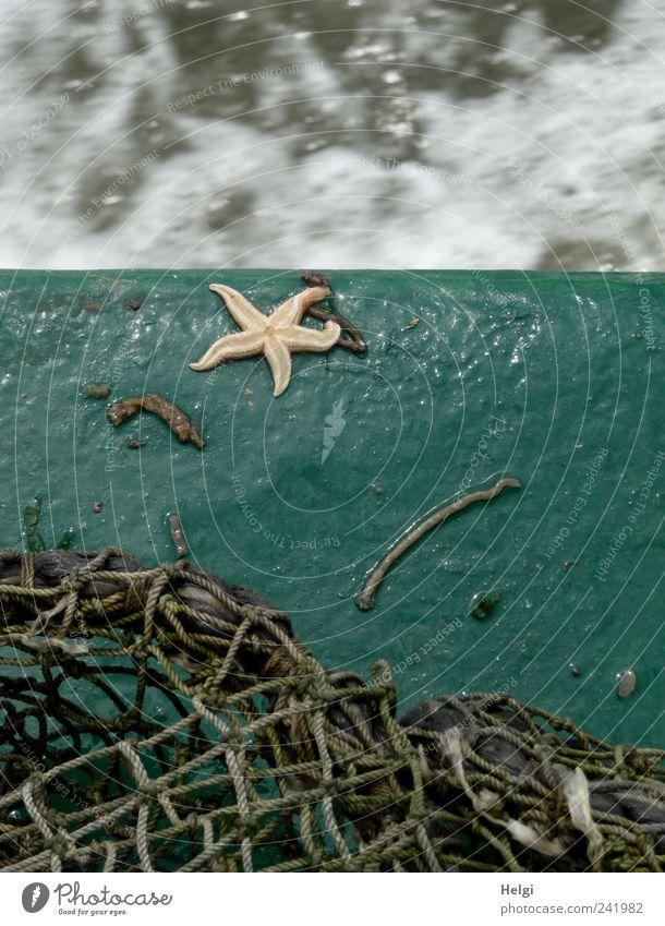 verirrt... Natur Wasser Meer blau Sommer Ferien & Urlaub & Reisen gelb Leben grau Wasserfahrzeug Metall klein Umwelt nass Ausflug fahren