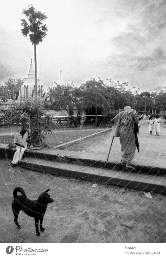 Mönch vor Stupa - Sri Lanka Hund Mensch Schwarzweißfoto