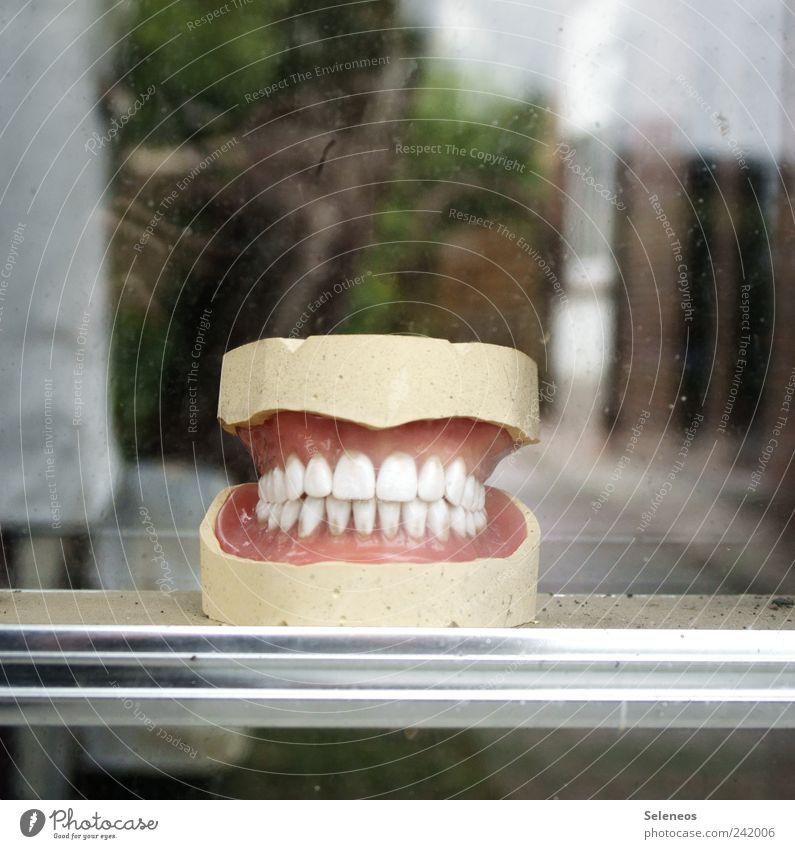 say cheese Zahnarzt Mensch Mund Zähne Kunststoff Lächeln lustig nah weiß Schaufenster Farbfoto Textfreiraum oben Schwache Tiefenschärfe