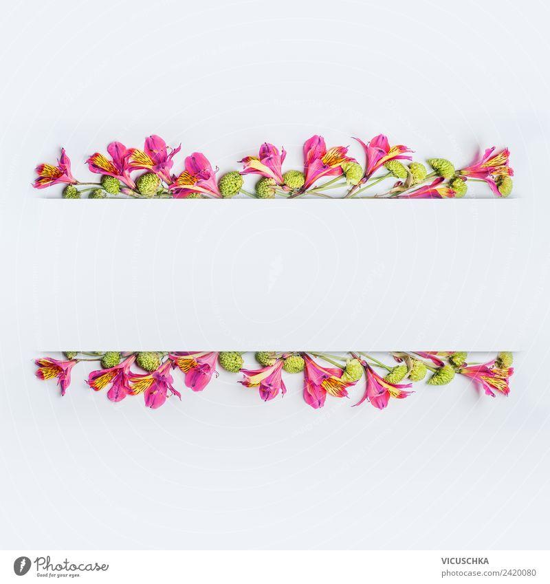 Schöne exotische Blumen Rahmen auf weiß Natur Sommer Pflanze rot Blatt Hintergrundbild Blüte Stil Feste & Feiern rosa Design Dekoration & Verzierung elegant