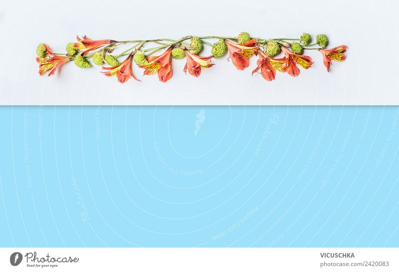 Hintergrund mit exotischen Blumen Design Sommer Pflanze Blatt Blüte Dekoration & Verzierung Blumenstrauß trendy gelb rosa Stil Entwurf Hintergrundbild weiß blau