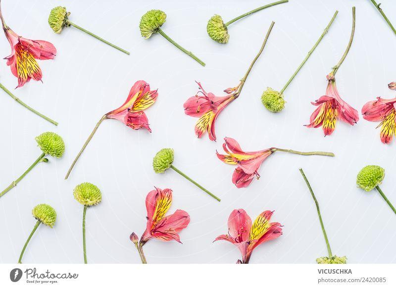 Blumen Pattern auf weiß Natur Sommer Pflanze grün rot Blatt gelb Hintergrundbild Blüte Stil rosa Design Dekoration & Verzierung Blumenstrauß trendy