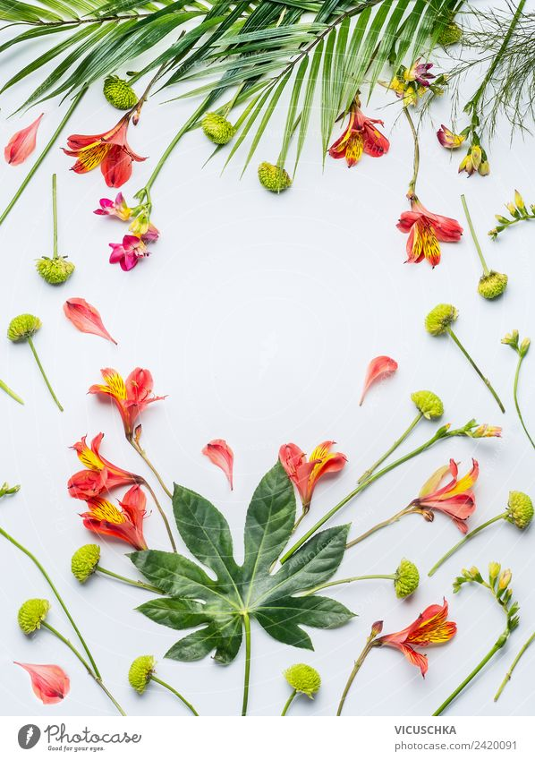 Tropischer Blumen- und Palmblätter auf weiß Natur Ferien & Urlaub & Reisen Sommer Pflanze Blatt Hintergrundbild Blüte Stil Design Dekoration & Verzierung