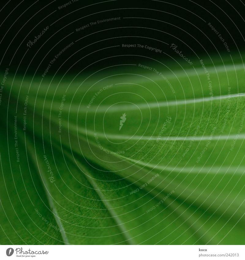 Blatt mit nix. Natur schön grün Pflanze Sommer schwarz Linie Kraft elegant ästhetisch Wachstum authentisch einfach Streifen natürlich