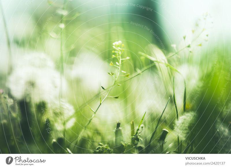 Grüner Natur Hintergrund mit wilden Pflanzen Ferien & Urlaub & Reisen Sommer grün Blume Lifestyle Hintergrundbild Frühling Wiese Garten Park Schönes Wetter