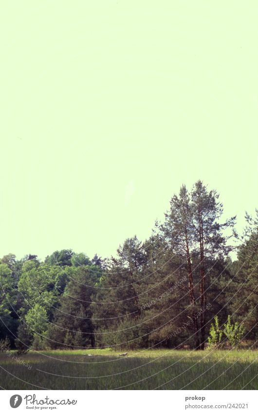 Lichtung Umwelt Natur Landschaft Pflanze Himmel Wolkenloser Himmel Sommer Klima Klimawandel Wetter Schönes Wetter Baum Gras Wiese Wald schön wild