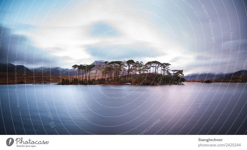 Pinsel Insel Ferien & Urlaub & Reisen Landschaft ästhetisch frech Frühlingsgefühle Abenteuer Irland Bauminsel See Europa mystisch Wolkenhimmel Farbfoto
