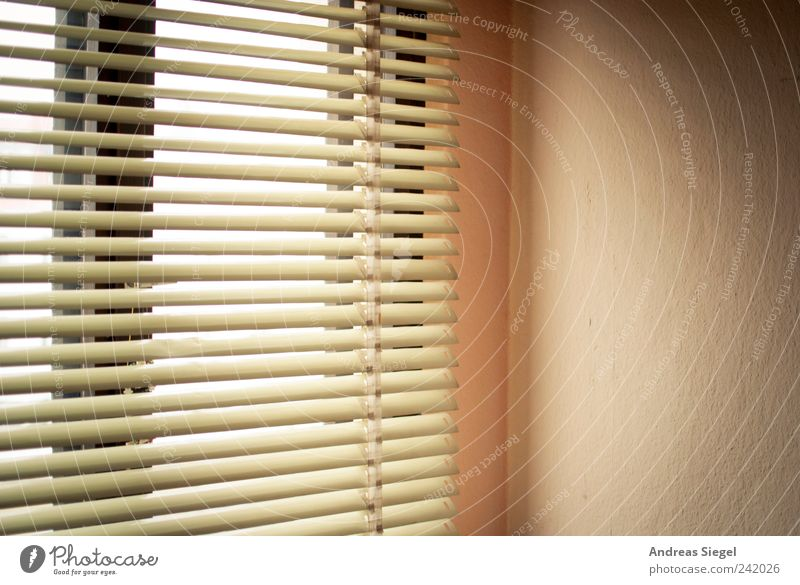Let the sunshine in ruhig Erholung Fenster Zufriedenheit hell Raum Wohnung Häusliches Leben Freundlichkeit harmonisch Schlafzimmer Jalousie