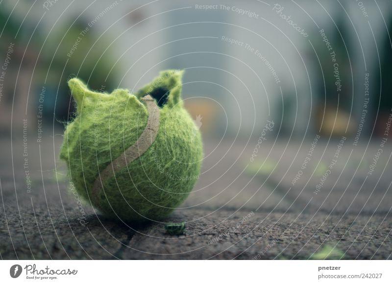 Tennis? Lifestyle Tennisball Ball kaputt Sportler Ballsport Spielen fangen toben Tier Haustier zerfetzen Farbfoto Gedeckte Farben Außenaufnahme Nahaufnahme