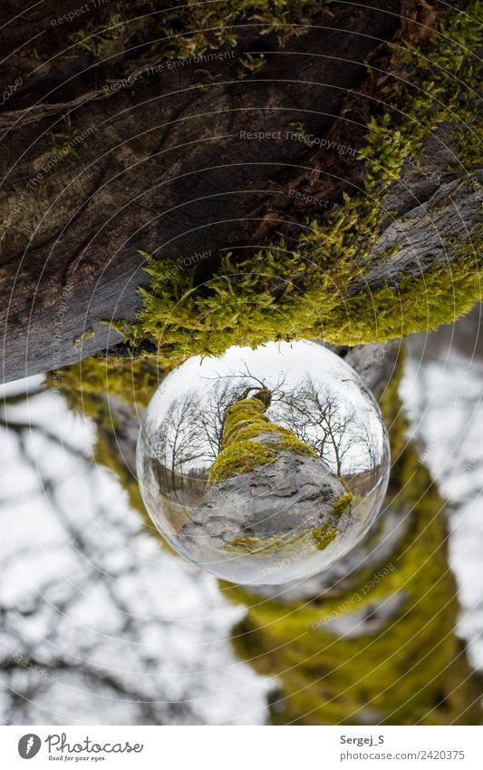 Ein Blick durch die Glaskugel Umwelt Natur Pflanze Baum Moos Garten Wald Kristallkugel Holz Kugel beobachten drehen hängen außergewöhnlich fest nah natürlich