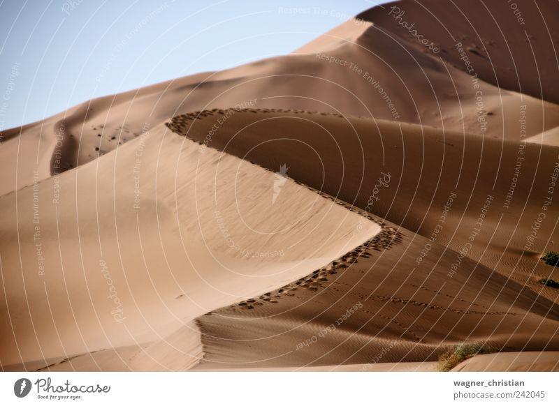 Dunes Ferien & Urlaub & Reisen ruhig Einsamkeit Ferne Wege & Pfade Sand Wärme Landschaft Kraft wandern Abenteuer Afrika Wüste natürlich Unendlichkeit Fußspur