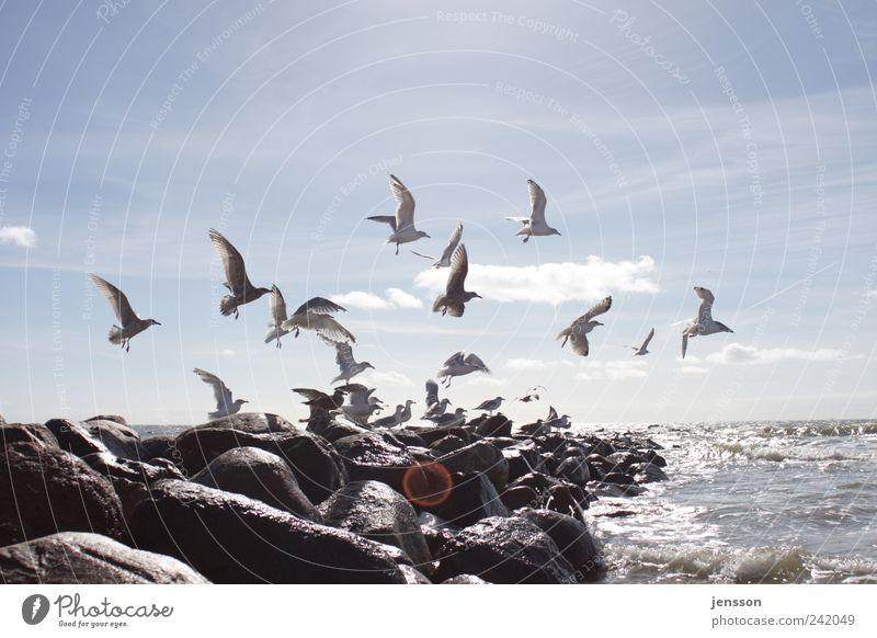 Ich bin gut zu Vögeln Himmel Natur Sommer Meer Strand Wolken Tier Ferne Umwelt Freiheit Bewegung Küste Stein hell Vogel Felsen