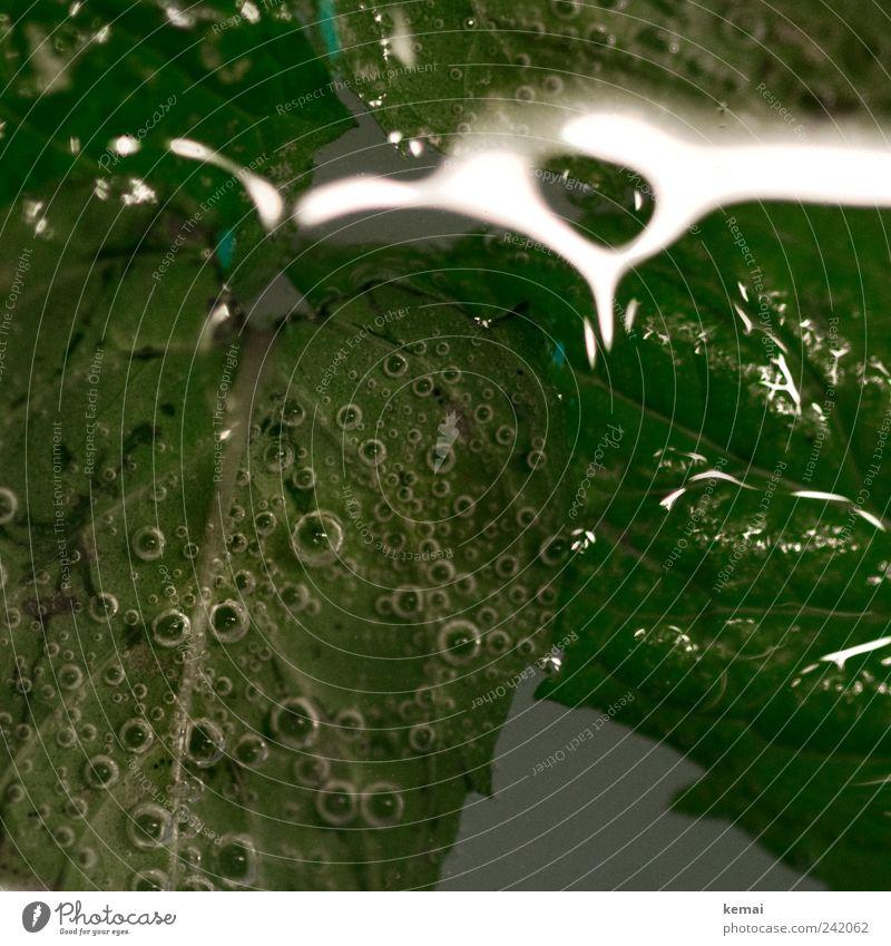 Luftblasen Lebensmittel Kräuter & Gewürze Minze Minzeblatt Erfrischungsgetränk Alkohol Spirituosen Mojito Cocktail grün sprudelnd Flüssigkeit Blattadern