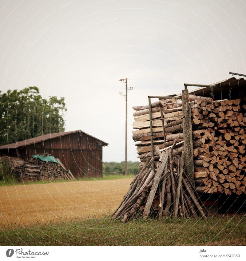 brennholz Natur Landschaft Himmel Sommer Pflanze Baum Gras Grünpflanze Nutzpflanze Wildpflanze Feld Hütte Gebäude Strommast Holz natürlich Brennholz Stapel