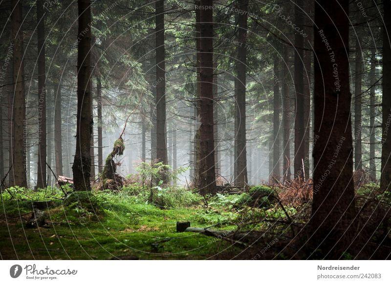 Sie sind da... Natur Landschaft Pflanze Baum Wald außergewöhnlich skurril stagnierend Außerirdischer Dunst Nebel Waldboden Düsterwald dunkel Troll unheimlich