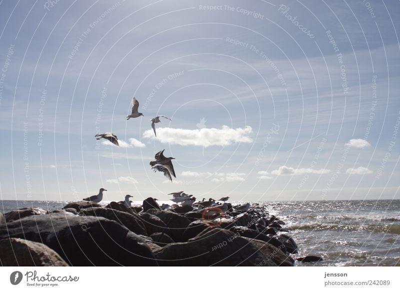 … trotzdem hauen sie ab! Himmel Natur blau Meer Strand Wolken Tier Ferne Umwelt Freiheit Bewegung Küste Stein hell Vogel Horizont