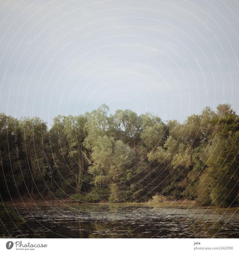 see Natur Landschaft Pflanze Himmel Baum Grünpflanze Wildpflanze Wald See natürlich blau braun grün Farbfoto Außenaufnahme Menschenleer Textfreiraum oben Tag