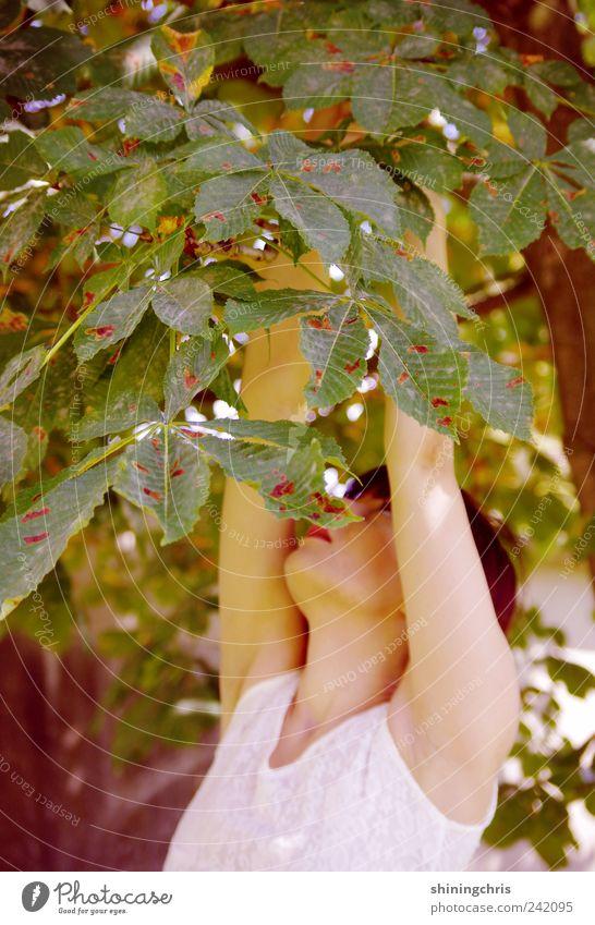 goldmarie feminin Junge Frau Jugendliche 18-30 Jahre Erwachsene Natur Sommer Kastanienbaum berühren Leichtigkeit pflücken strecken Märchen verstecken