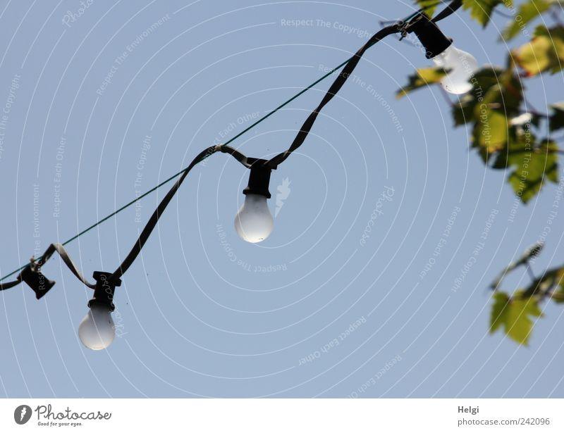 die letzten ihrer Art... blau grün Pflanze Sommer Blatt schwarz grau Seil Energiewirtschaft authentisch Perspektive Kabel einzigartig retro Technik & Technologie leuchten