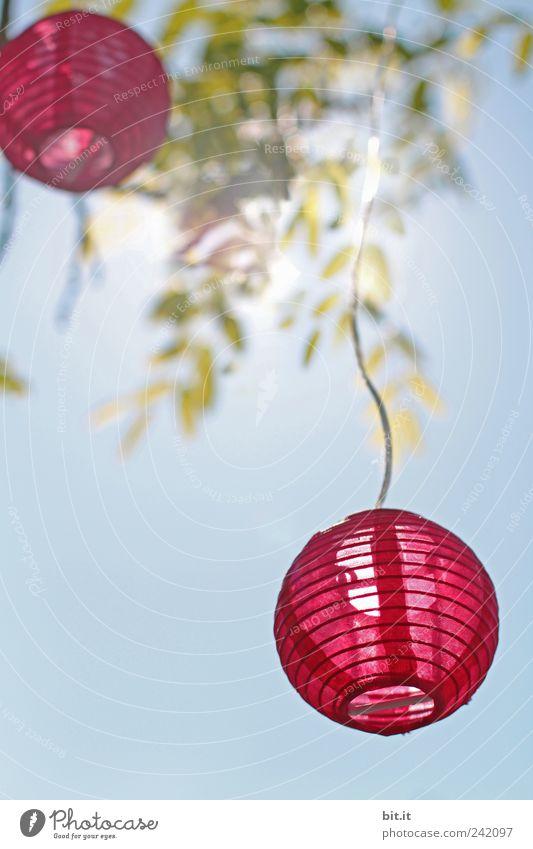 Lichtbällchen Himmel blau Sommer Blatt Freude Frühling Feste & Feiern Lampe Garten Stimmung rosa Luft leuchten Dekoration & Verzierung Schönes Wetter rund