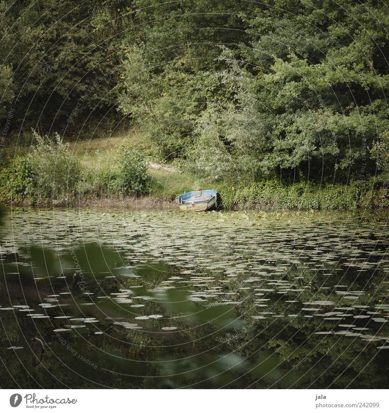 boot Natur Landschaft Pflanze Baum Gras Sträucher Grünpflanze Wildpflanze See Ruderboot natürlich grün Farbfoto Außenaufnahme Menschenleer Tag