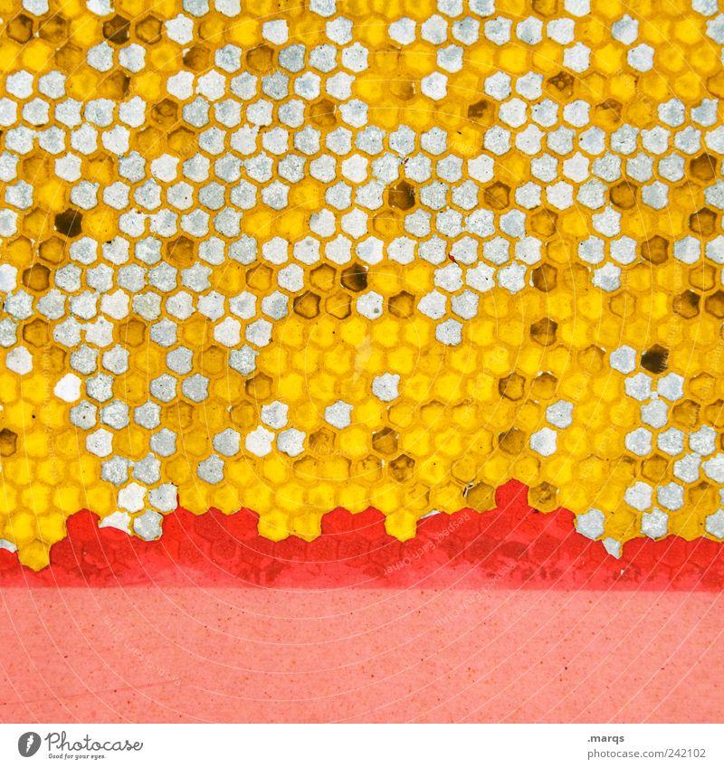 Bee Stil Design Zeichen Bienenwaben Wabenmuster viele gelb rosa Farbe Ordnung skurril Farbfoto mehrfarbig Detailaufnahme abstrakt Muster Strukturen & Formen