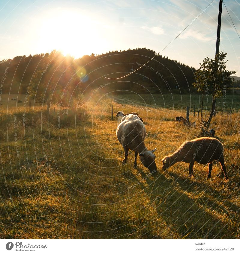 Brüder teilen Natur Himmel Baum Pflanze Sommer ruhig Tier Wald Wiese Gras Landschaft Zufriedenheit Tierpaar Wetter Umwelt Horizont
