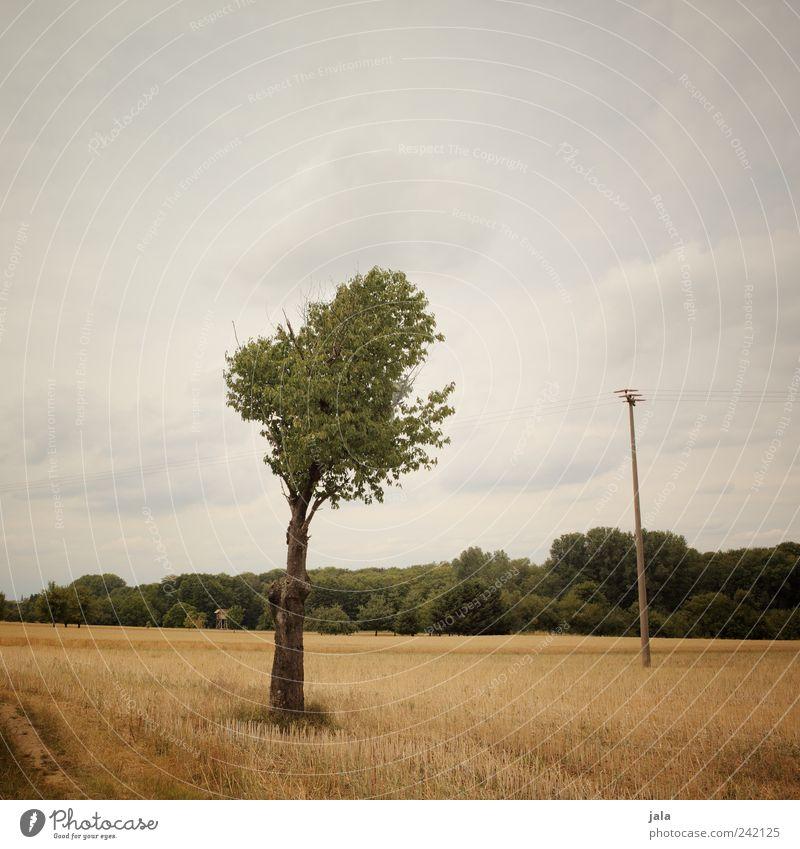 feld Landschaft Pflanze Himmel Wolken Sommer Baum Gras Sträucher Grünpflanze Nutzpflanze Feld Wald Strommast Ferne natürlich braun gelb grün Farbfoto