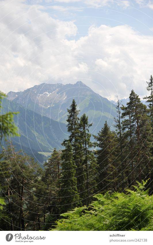 Heimatfilmfototapete Natur Himmel Baum Sommer Wolken Wald Berge u. Gebirge Landschaft Sträucher Kitsch Alpen Tanne Gipfel Schönes Wetter Klischee