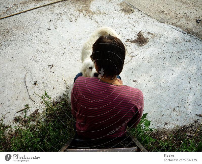 Hundeblick Mensch weiß Sommer Tier ruhig Glück Freundschaft Zusammensein Rücken sitzen natürlich Schutz Vertrauen Schönes Wetter Partnerschaft